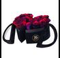 Flowerbox Longlife Mary J Rainbow