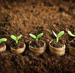 Fertilizantes & sustratos