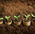 Grow dünger & substrate