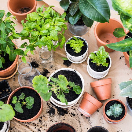 Plants, trees, seeds, grow kits and products for plant care and crop protection