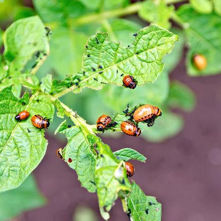 Bio pesticiden van o.a. Canna, Rogis, Spray & Grow