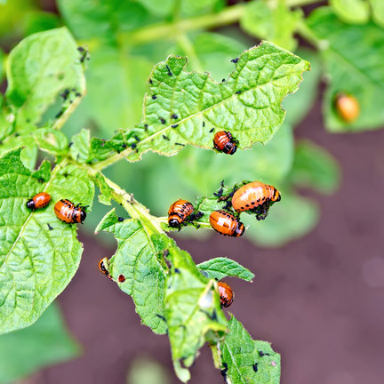 Pesticides and insects for protecting your crops and plants