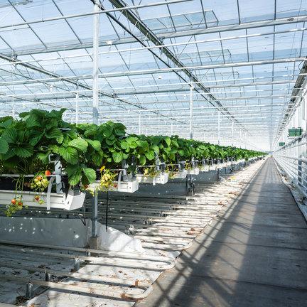Greenhouses for garden & balcony