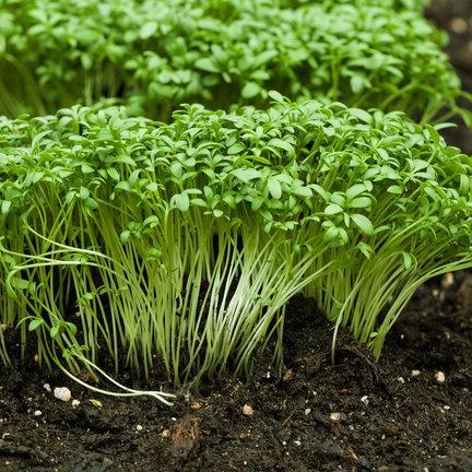 Cultive kits para cultivar verduras y hierbas solo