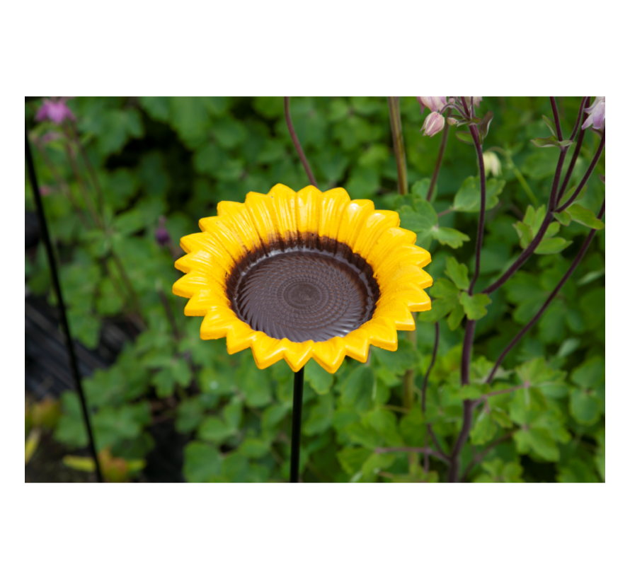 Buzzy Bird Gift Futterstock Sonnenblume
