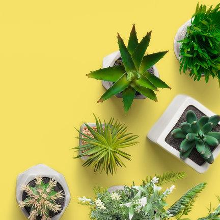 Planten en bomen kopen