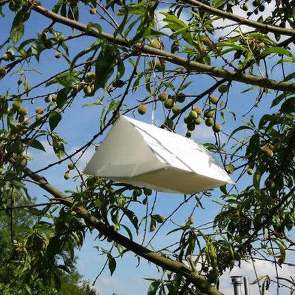 Insektenfallen zur schädlingsbekämpfung im gemüsegarten oder gewächshaus