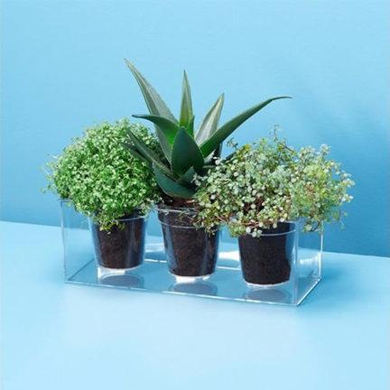 Plantenbakken en kweektafels voor in de keuken