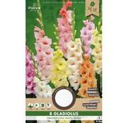 Florex Gladiolus Pastel Mixed 8 pcs.