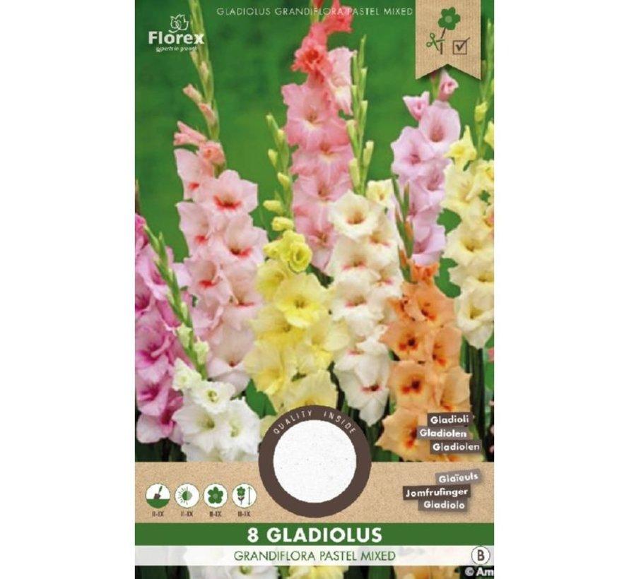 Florex Gladiool Pastel Gemixt 8 stuks