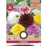 Florex Dahlia Decoratief Select mix 5 st.