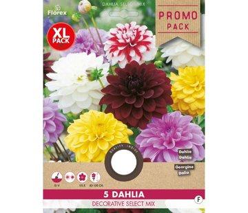 Florex Dahlia Decoratief Select mix 5 st.