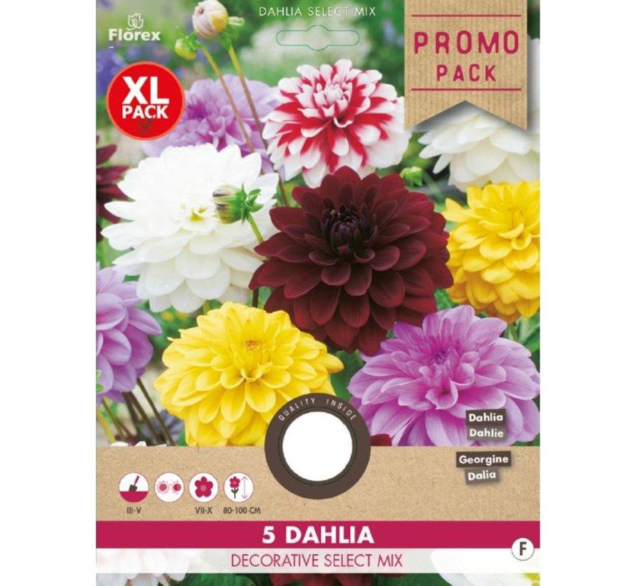 Dahlia Decoratief Select mix 5 stuks