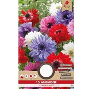 Florex Anemone St. Briged Mixed 15 pcs.