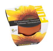 Buzzy Fun Wachstumsgeschenk Sonnenblumen