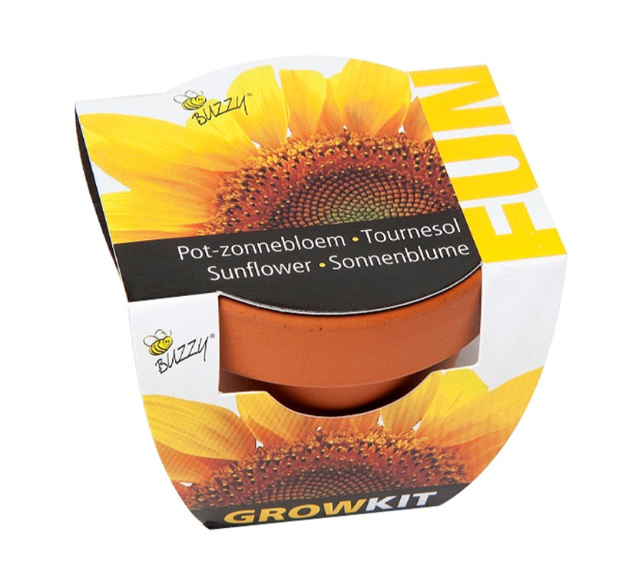 Fun Wachstumsgeschenk Sonnenblumen
