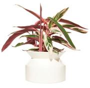 Boskke Spool Planter Ceramic Flower Pot White Large