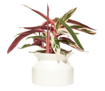 Boskke Spool Planter Maceta Ceramica Blanco Grande