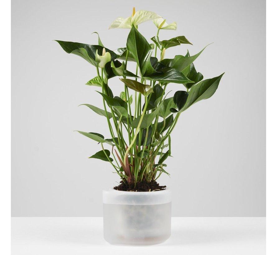 Boskke Till Planter Bloempot 12 cm Transparant