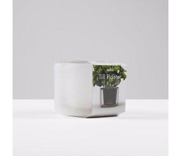 Boskke Till Planter Flower Pot 12 cm Transparent