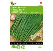 Buzzy Garlic Chives Seeds
