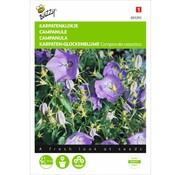 Buzzy Campanula carpatica Karpaten-Glockenblume