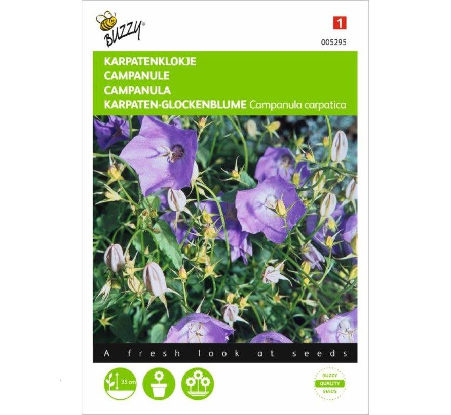 Buzzy Campanula carpatica Karpatenklokje