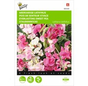 Buzzy Seeds Everlasting Sweet Pea Mixed