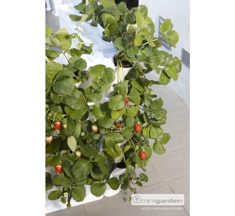 Minigarden Vertical Corner Eckmodule Weiß