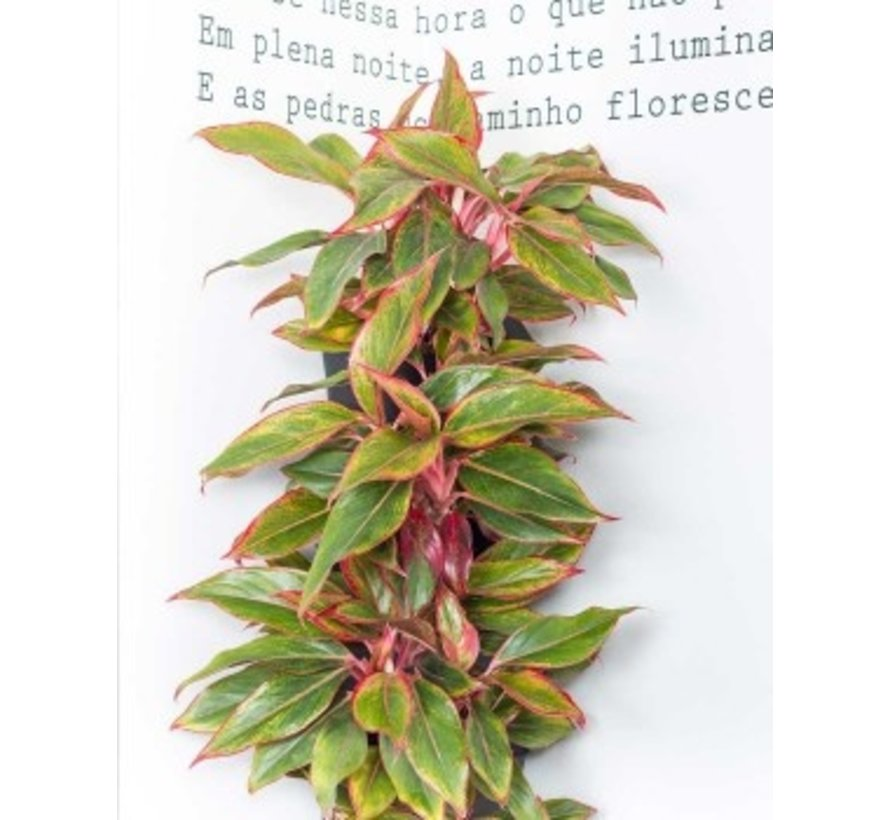 Minigarden Vertical Corner Hoekmodule Terracotta