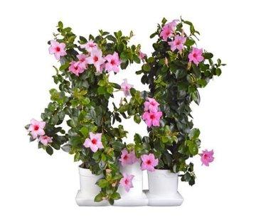 Minigarden Basic M Pots Flower Pot White