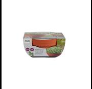 Buzzy Grow Gifts Microgreens Maceta de Terracota Col Rizada