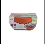 Buzzy Grow Gifts Microgreens Maceta de Terracota Mizuna Roja