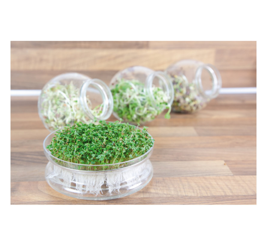 Organic Glass Sprouting Jar Daikon