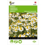 Buzzy Chamomile Seeds