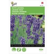 Buzzy Echte Lavendel Zaden