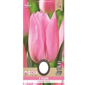 Florex Tulip Christmas Dream Pink Flower Bulbs 8 pcs.