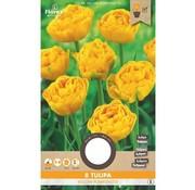 Florex Bulbos de Flores de Tulipán Yellow Pomponette Amarillo 8 pzas.