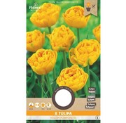 Florex Tulip Yellow Pomponette Flower Bulbs 8 pcs.