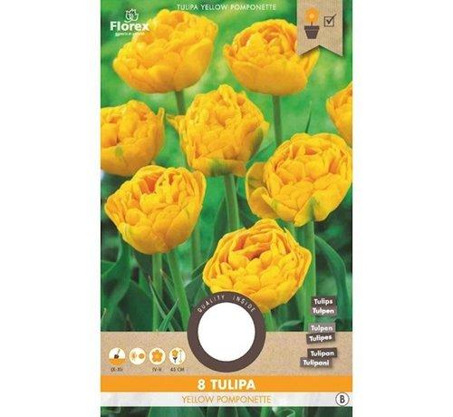 Florex Tulip Yellow Pomponette Flower Bulbs 8 pcs.