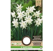 Florex Daffodil Thalia Botanical White Flower Bulbs 8 pcs.
