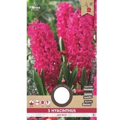 Florex Hyacinth Jan Bos Red Flower Bulbs 5 pcs.