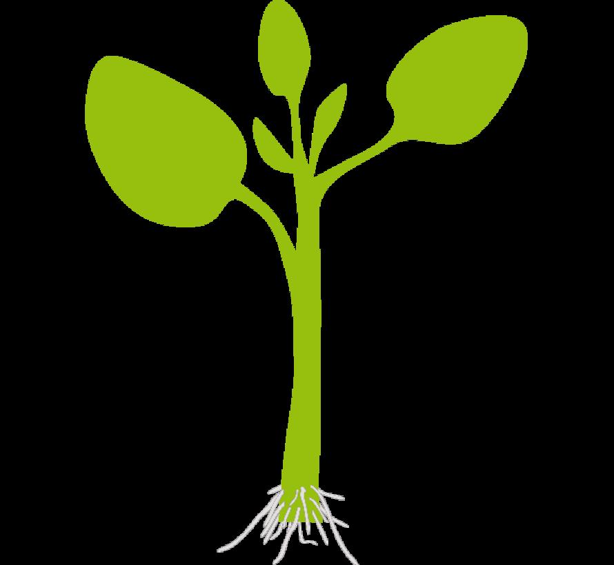 Rhizopon Wurzelpulver Grün Chryzotop 0.25% 20 Gramm