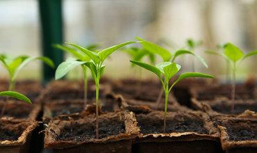 In 5 stappen beginnen met kweken