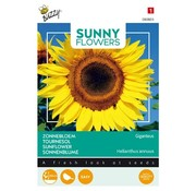 Buzzy Giant Sunflower Giganteus Seeds