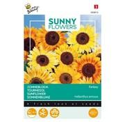 Buzzy Sonnenblume Fantasy Samen