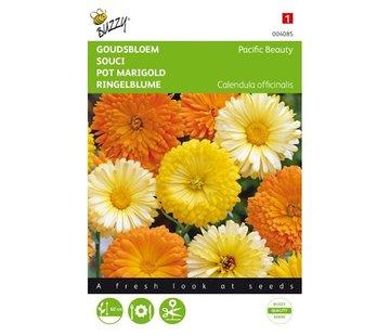 Buzzy Pot Marigold Pacific Beauty Mixed
