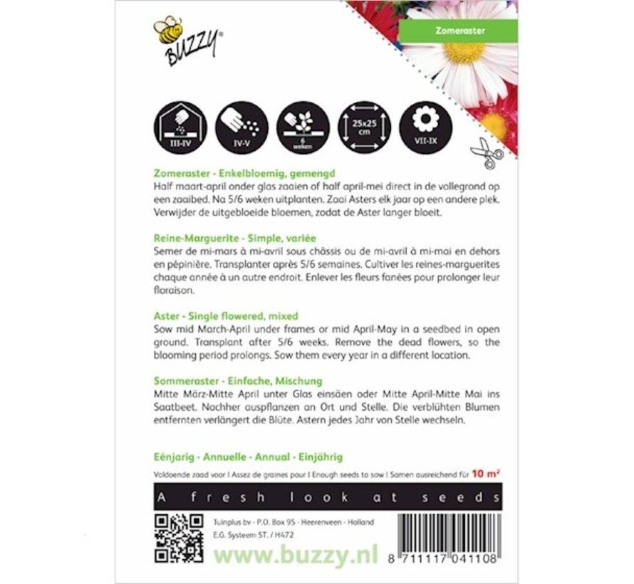 Buzzy Sommeraster Einzelblütig Gemischt