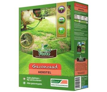 Gras-Samen Wiederherstellung 600 Gramm