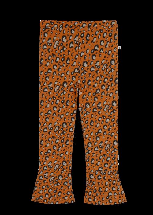 Ammehoela Ammehoela Loua Leopard